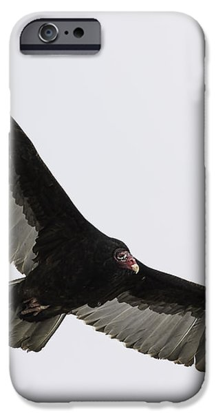 Turkey Vulture In Flight iPhone Case by Thomas Young