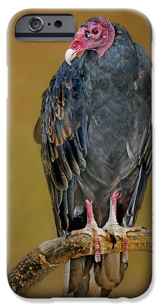 Vulture iPhone Cases - Turkey Vulture iPhone Case by Nikolyn McDonald