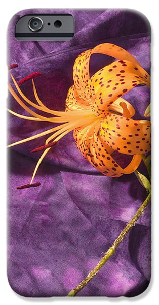 Lilium iPhone Cases - Turks-Cap lilly Flower iPhone Case by Keith Webber Jr