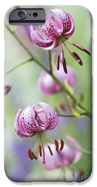 Anther iPhone Cases - Turks Cap Lily iPhone Case by Tim Gainey