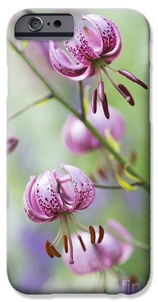 Lilium iPhone Cases - Turks Cap Lily iPhone Case by Tim Gainey