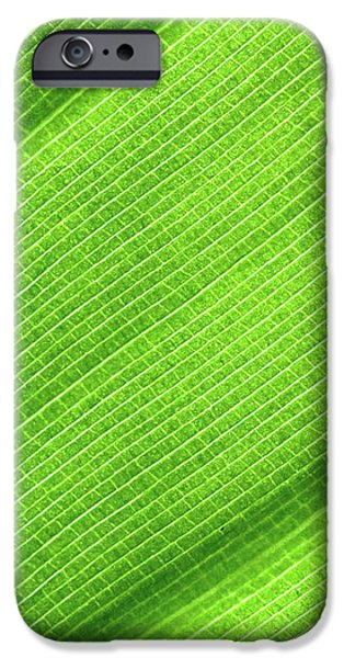 Turning a New Leaf iPhone Case by Rona Black