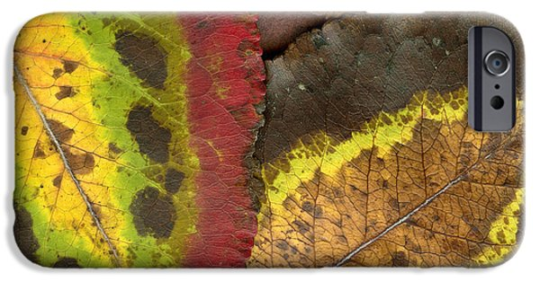 Turning Leaves iPhone Cases - Turning Leaves 2 iPhone Case by Stephen Anderson