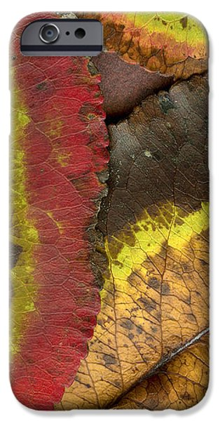 Turning Leaves 2 iPhone Case by Stephen Anderson