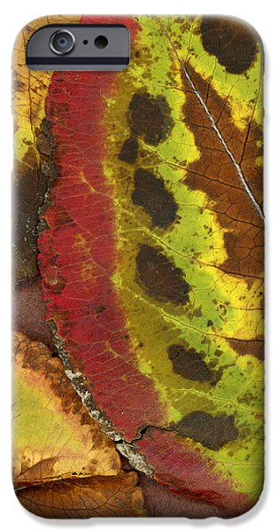 Turning Leaves iPhone Cases - Turning Leaves 3 iPhone Case by Stephen Anderson