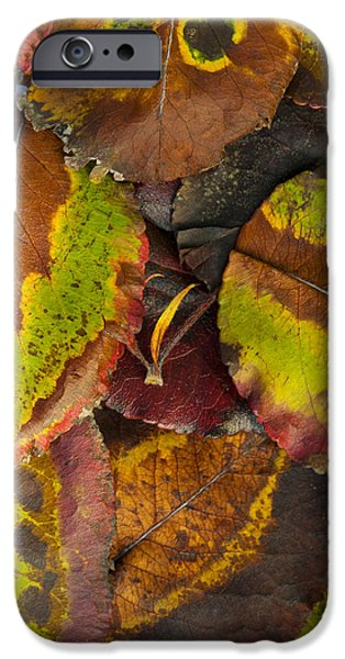 Turning Leaves iPhone Cases - Turning Leaves 4 iPhone Case by Stephen Anderson