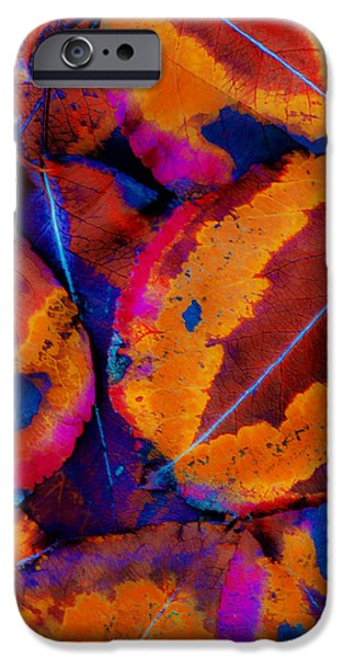 Turning Leaves iPhone Cases - Turning Leaves 5 iPhone Case by Stephen Anderson