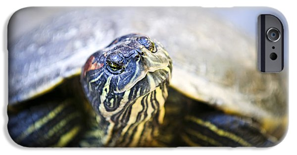 Slider Photographs iPhone Cases - Turtle iPhone Case by Elena Elisseeva