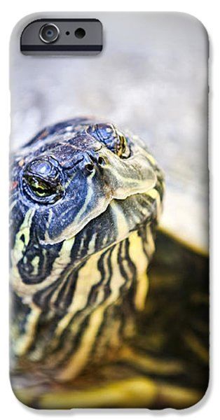 Turtle iPhone Case by Elena Elisseeva