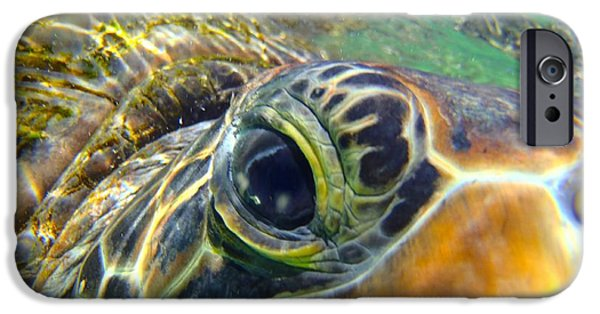Reptiles Photographs iPhone Cases - Turtle Eye iPhone Case by Carey Chen