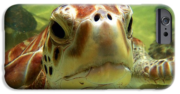 Reptiles Photographs iPhone Cases - Turtle face iPhone Case by Carey Chen