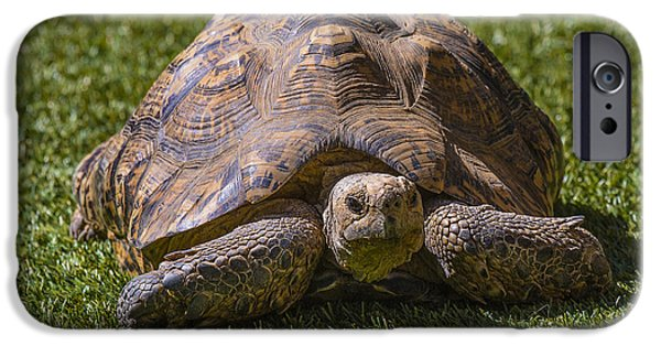 Reptiles Photographs iPhone Cases - Turtle iPhone Case by Garry Gay