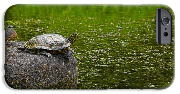 Slider Photographs iPhone Cases - Turtle on a Rock 2 iPhone Case by Sharon  Talson