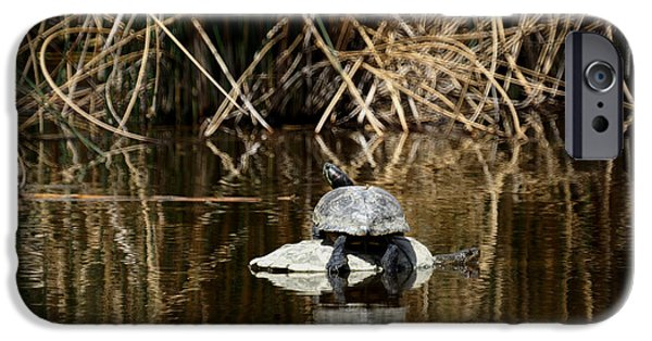 Slider Photographs iPhone Cases - Turtle on Turtle iPhone Case by Ernie Echols