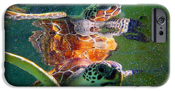 Reptiles Photographs iPhone Cases - Turtle reflection iPhone Case by Carey Chen