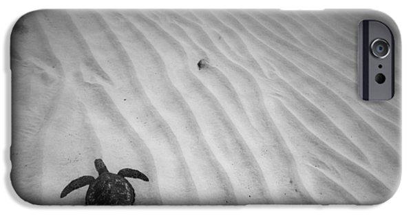 Reptiles Photographs iPhone Cases - Turtle Ridge iPhone Case by Sean Davey