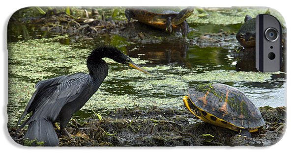 Anhinga iPhone Cases - Turtles And Anhinga iPhone Case by Mark Newman