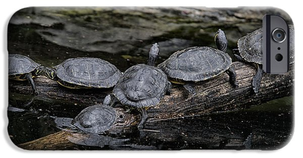 Smithsonian National Zoological Park iPhone Cases - Turtles iPhone Case by Carol Ailles