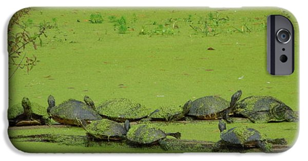 Alga iPhone Cases - Turtles in camo iPhone Case by Jodi Terracina