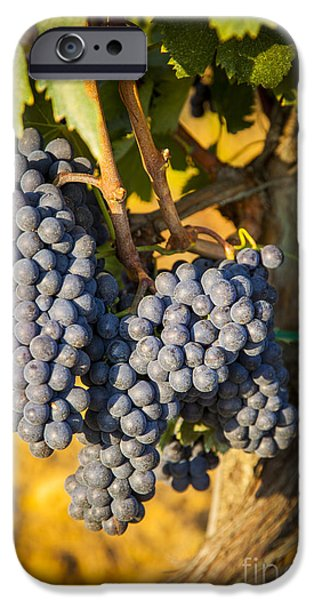Chianti iPhone Cases - Tuscan Vineyard iPhone Case by Brian Jannsen