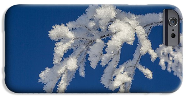 Willow Lake iPhone Cases - Twigs in White iPhone Case by Tim Grams