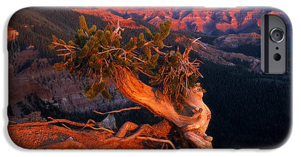 Pines iPhone Cases - Twisted Forest iPhone Case by Leland D Howard