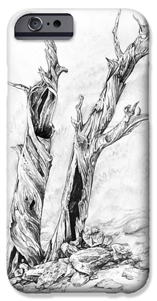 Nature Study Drawings iPhone Cases - Twisted trees iPhone Case by Aaron Spong