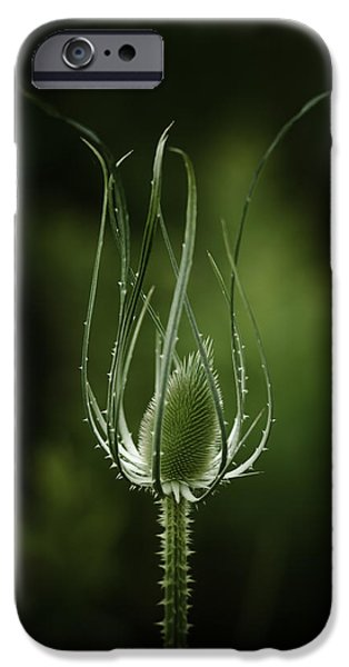 Thistle iPhone Cases - Twisting Beauty iPhone Case by Shane Holsclaw