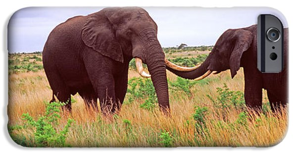 Loxodonta iPhone Cases - Two African Elephants Loxodonta iPhone Case by Panoramic Images