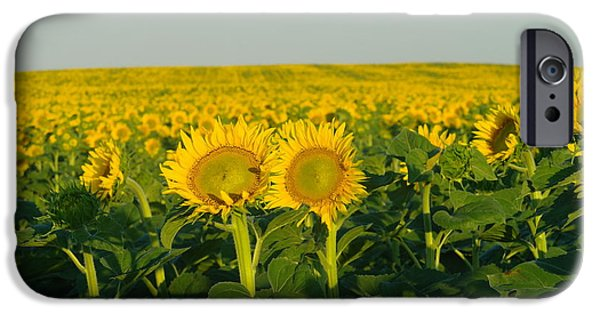 Crops iPhone Cases - Two Among the many iPhone Case by Jeff  Swan