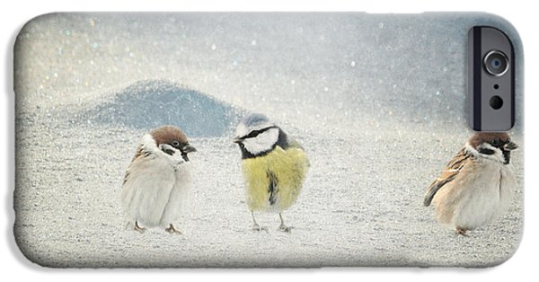 Animal Picture iPhone Cases - Two and one iPhone Case by Heike Hultsch