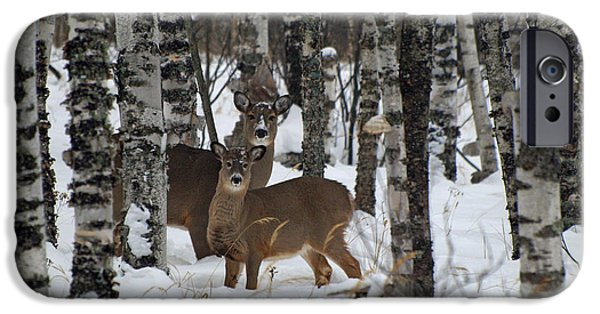 Recently Sold -  - Wintertime iPhone Cases - Two Are Better Than One iPhone Case by James Peterson
