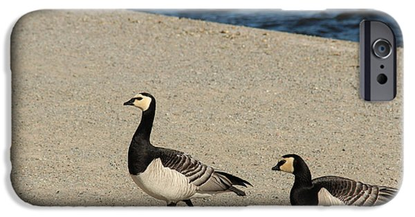 Sea Birds iPhone Cases - Two Barnacle Geese iPhone Case by Kerstin Ivarsson