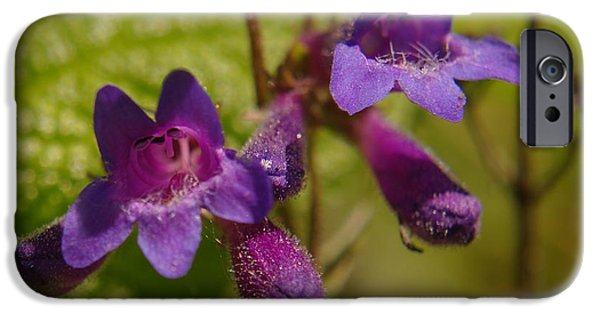 Floral Photographs iPhone Cases - Two Beautiful Twins iPhone Case by Jeff  Swan