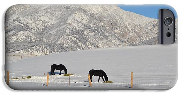 Nature Scene Jewelry iPhone Cases - Two Black Horses iPhone Case by Anne Foster
