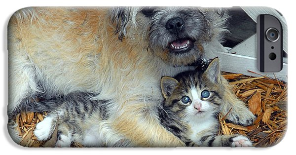 Cute Puppy iPhone Cases - Two Buddies  iPhone Case by Jeff McJunkin