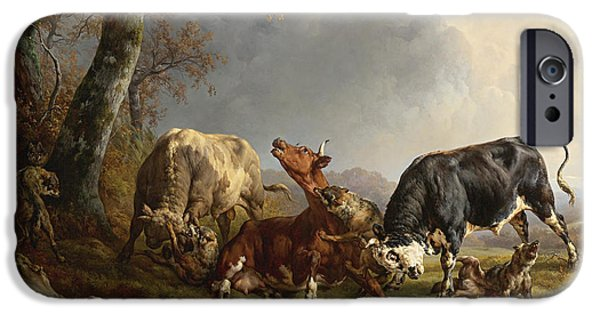 Loup iPhone Cases - Two bulls defend against a cow attacked by wolves iPhone Case by Jacques Raymond Brascassat