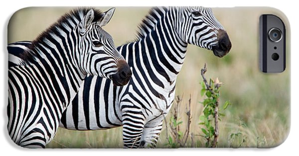 Tarangire iPhone Cases - Two Burchells Zebras Equus Burchelli iPhone Case by Panoramic Images