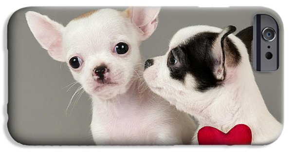 Cute Puppy iPhone Cases - Two Chihuahua puppies. iPhone Case by Borislav Stefanov