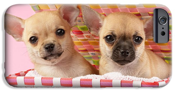Puppies iPhone Cases - Two Chihuahuas iPhone Case by Greg Cuddiford