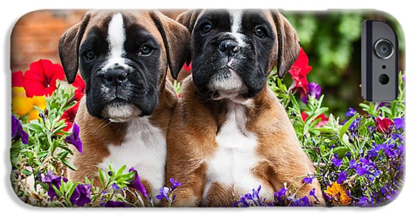 Puppies iPhone Cases - two cute Boxer dog puppies iPhone Case by Doreen Zorn