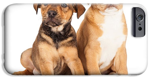 Litter Mates iPhone Cases - Two Cute Crossbreed Puppies iPhone Case by Susan  Schmitz