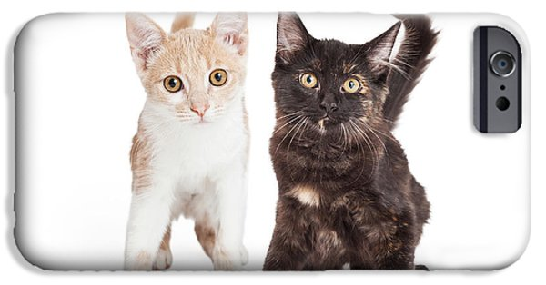 Animals Photographs iPhone Cases - Two Cute Kittens Together iPhone Case by Susan  Schmitz