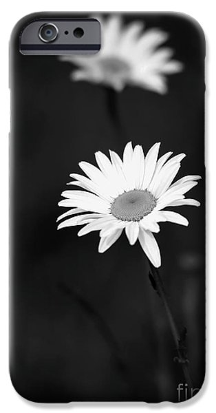 Two Daisies iPhone Case by Sabrina L Ryan