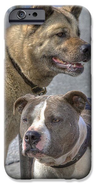 Fury iPhone Cases - Two Dogs iPhone Case by Russell Trevail