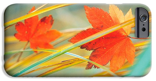 Fall iPhone Cases - Two Fall Orange Fall Leaves Amid Yellow iPhone Case by Panoramic Images