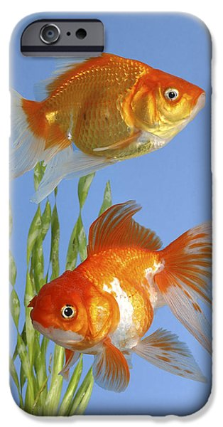 Greg Cuddiford Digital iPhone Cases - Two Fish FS101 iPhone Case by Greg Cuddiford