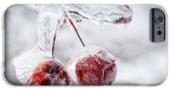Winter Storm iPhone Cases - Two frozen crab apples  iPhone Case by Elena Elisseeva