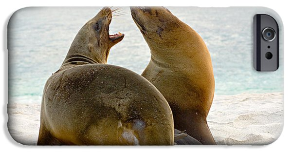 Sea Lions iPhone Cases - Two Galapagos Sea Lions Zalophus iPhone Case by Panoramic Images