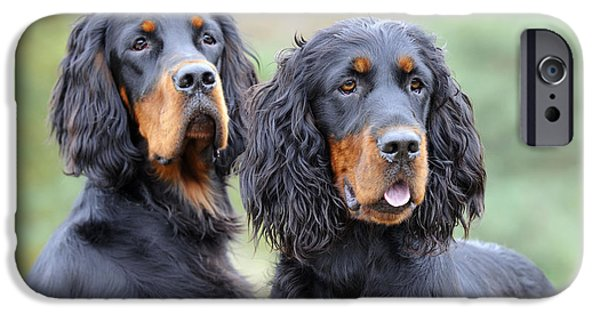 Gordon Setter iPhone Cases - Two Gordon Setters iPhone Case by John Daniels
